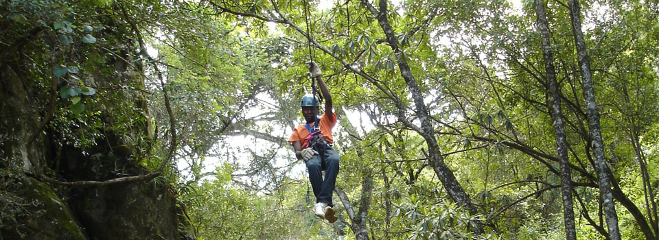 Aerial Canopy Trail