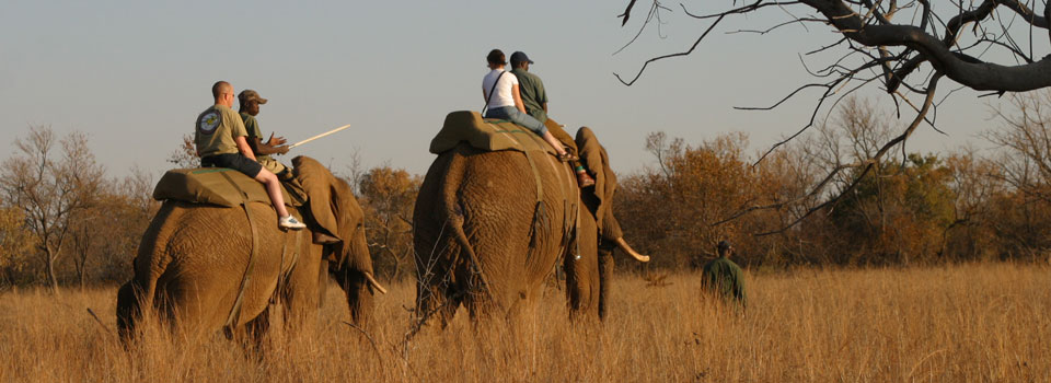 Elephant Interaction and Ride
