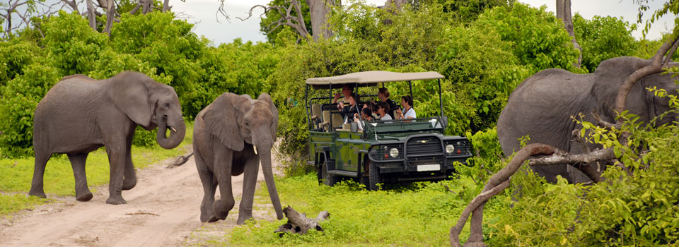 Full Day Kruger National Park Game Drive